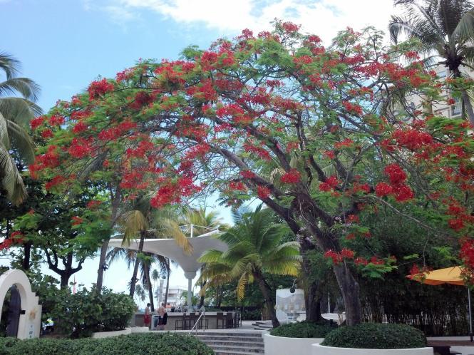 A pool view at the El San Juan Resort & Casino