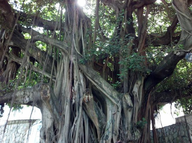 2014-05-16 El San Juan yoga in Banyan Tree studio 2