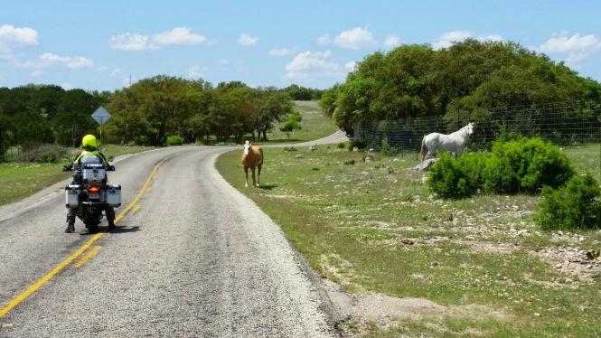 Free range horses!