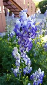 fabulous bloom