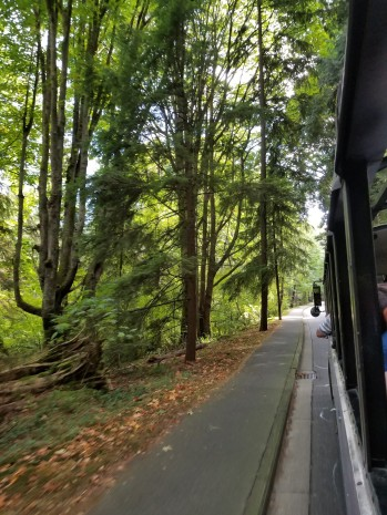 Riding the bus through the evergreens