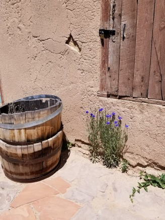 Flowers growing from adobe in the Kit Carson home courtyard