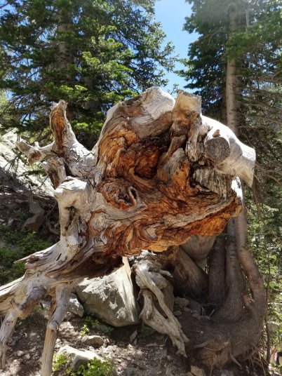 Interesting root structure